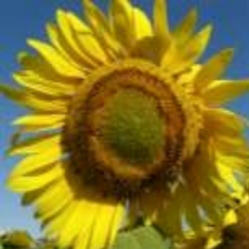 Гібрид соняшника «Елітсон»