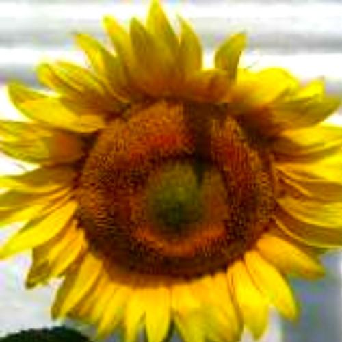 Гібрид соняшника «Ясон»